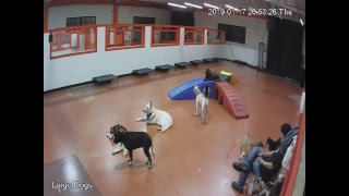 South Park Doggie LAX - Large Dogs Live Stream