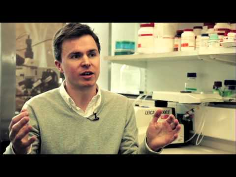 Dopamine neurons and Parkinson's disease