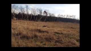 Buddy On Wheels Hunt Test