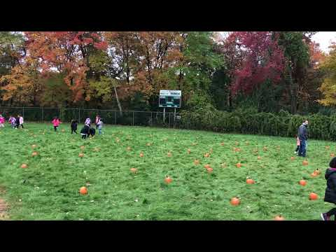 Annual pumpkin patch at Oaklandvale Elementary School