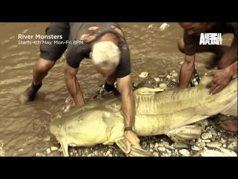 Animal Planet&Discovery Goonch Devil Catfish Fish warrior from YouTube · High Definition · Duration:  45 minutes  · 189 views · uploaded on 11/27/2015 · uploaded by Pete Girly