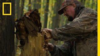 The Shroom Biz | National Geographic