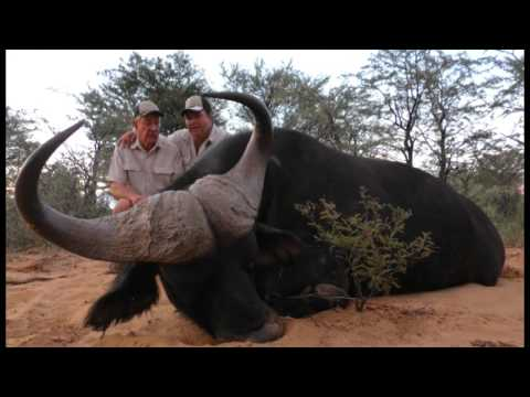Lion and Plains Game Hunting in South Africa with Tinashe Outfitters