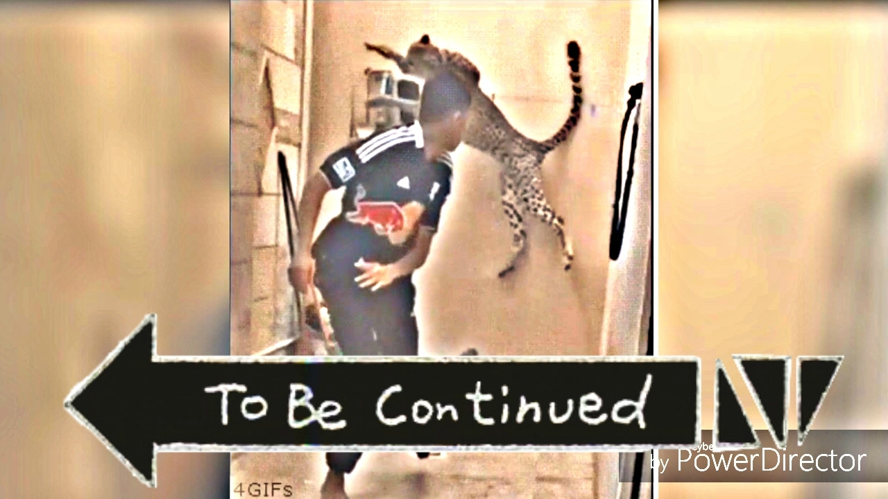 Cheetah Is Behind Me To Be Continued Meme Youtube