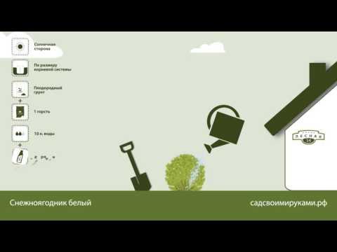 Декоративные растения для сада l Русские Семена интернет