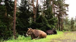 видео Лечебные курорты Грузии. Обсуждение на LiveInternet