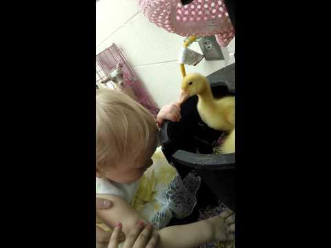 Yessenia video easter egg hunt