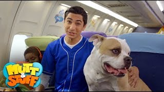 Mutt Minis - Dogs on a Plane | Mutt & Stuff thumbnail