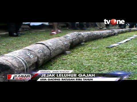 Warga Sragen Digemparkan Dengan Penemuan Fosil Gading Gajah Purba Raksasa