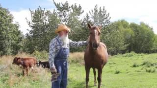 Old MacDonald Had a Farm (Real Animals)