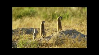 5K African Wildlife Virtual Trip to Kgalagadi Transfrontier Park, South Africa 1 Hour Video