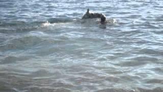 Horse Swimming.MPG