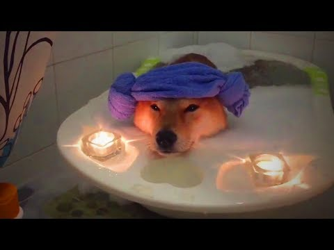 Spa for Pets 🐩🐾 Pet Relaxing Therapy (Part 2) [Funny Pets]