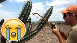 OLHA O QUE ACHEI DENTRO DO MANDACARÚ( se inscreva no canal) thumbnail