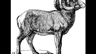 Que animal eres y tus caracteristicas segun el horoscopo chino Miralo ya!