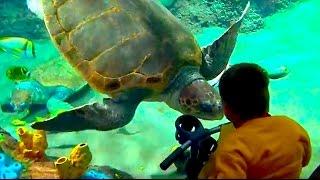 Огромные черепахи в San Diego SeaWorld