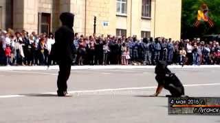 Без комментариев  Служебные собаки   задержание диверсанта