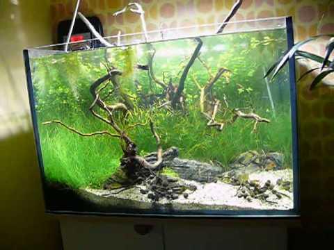 Planted aquarium offcube 120l tank youtube for Aquarium 120l