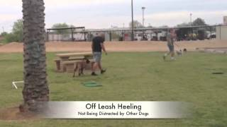 Pet Dog Obedience Training Arizona