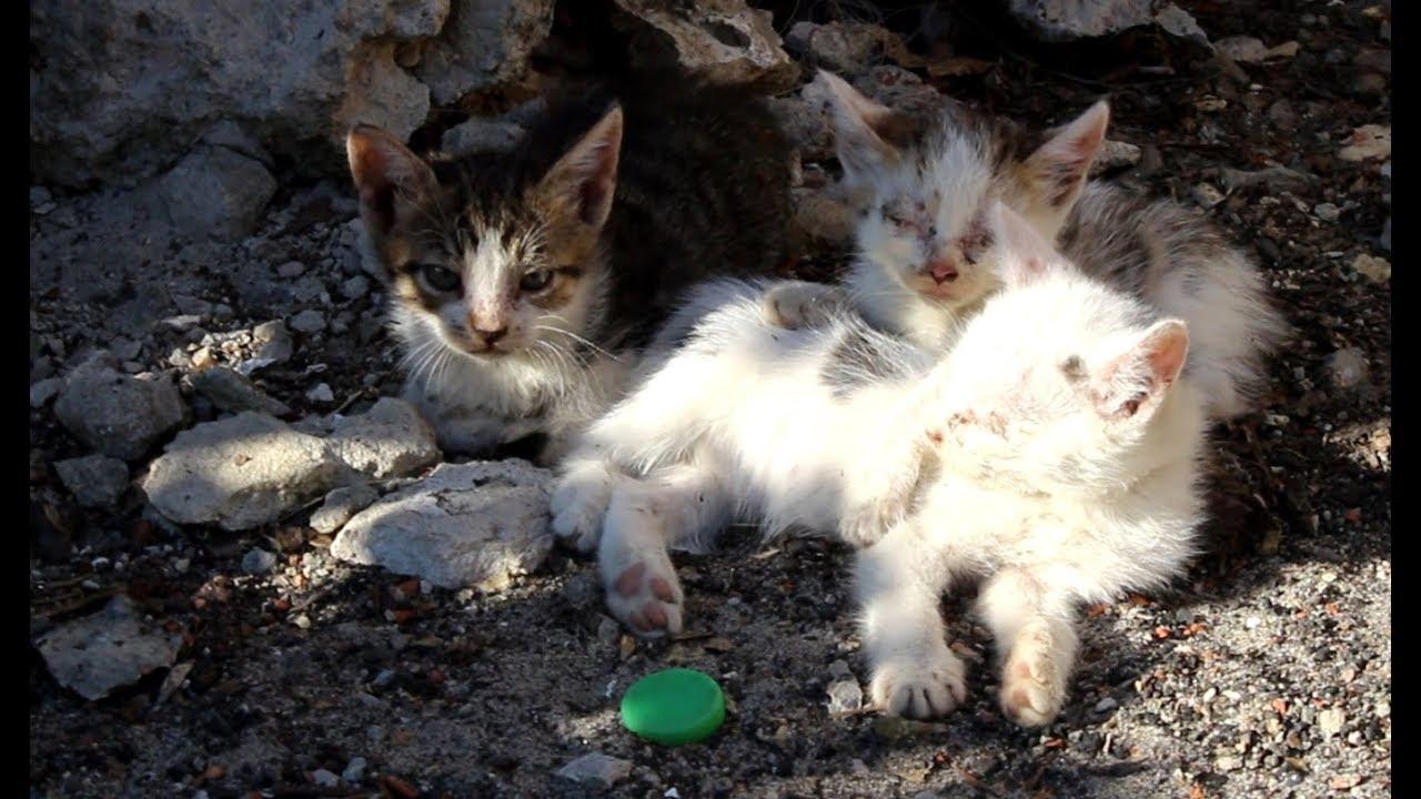 Бездомная кошка и её котята больны. ХОМКИ спешат на помощь ...