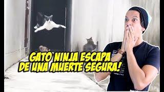 Gato Escapa de la Muerte!