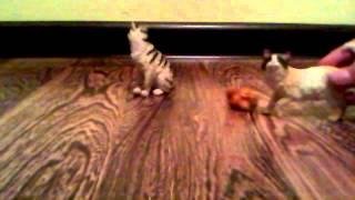 Коты водители 2 серия Сила трёх