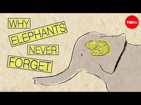 Why elephants never forget Alex Gendler