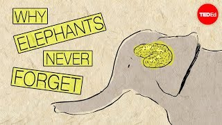 Repeat youtube video Why elephants never forget - Alex Gendler
