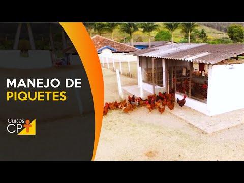 Clique e veja o vídeo Criação de Frango e Galinha Caipira - Manejo de Piquetes