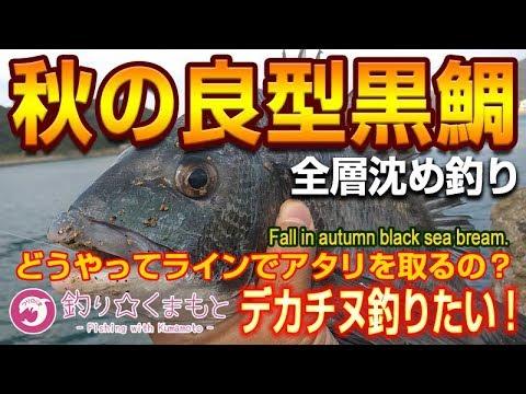 チヌ全層沈め釣りで良型の秋チヌを仕留める黒鯛| 沈め釣りってどうやってラインでアタリを取るの
