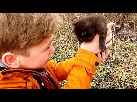 Коля СПАСАЕТ ЗАМЁРШЕГО ПОЛУЖИВОГО котёнка. Но ЗАХОЧЕТ ли Никиса стать МАМОЙ для малыша?