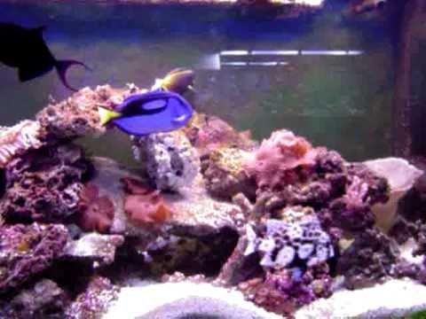220 Gallon Saltwater Aquarium