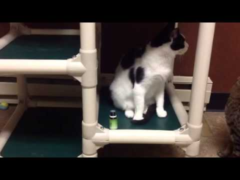 Cats Cradle Shelter Using Aromatherapy For Scared Cats