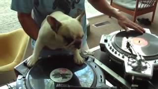 Gambar cover DJ anjing