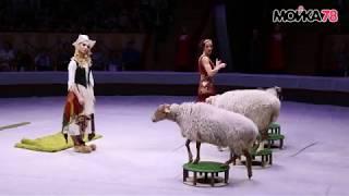 """Шоу """"Золушка"""" в цирке на Фонтанке"""