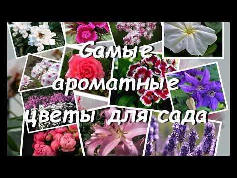 Вопрос: Какие цветы вы садите в саду для аромата?