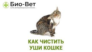 Как чистить уши кошке. Ветеринарная клиника Био-Вет.