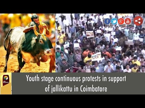 Youth stage continuous protests in support of jallikattu in Coimbatore