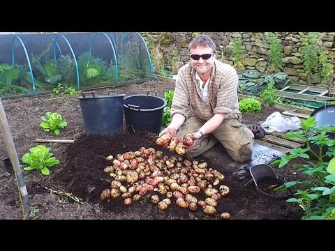 how to grow potatoes from potatoes