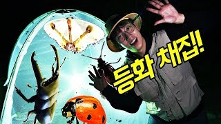 등화 채집! 인공 불빛으로 수백 마리 곤충 잡기!