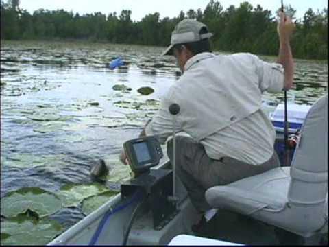 Secrets To Successful Shiner Fishing DVD ( 1 Hour & 2 Min. )