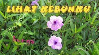 Lihat Kebunku | lirik lagu | Lagu Anak Indonesia
