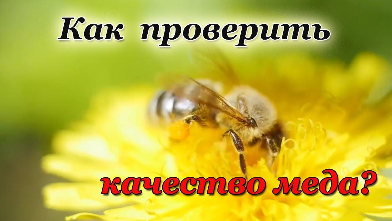 Как  проверить качество меда?  Как купить натуральный мед, а не фальсифицированный?
