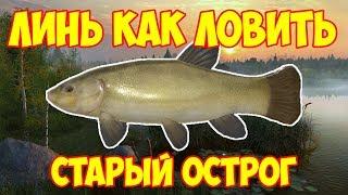 русская рыбалка 4 / ЛИНЬ озеро Старый Острог / фарм как ловить