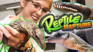 touring-reptile-rapture-behind-the-scenes