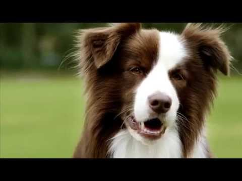 Rose-Hip Vital® Canine 30 sec TVC - Keep doing the things you love!