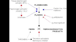 Fibrinolysis - Anticoagulation Pathway