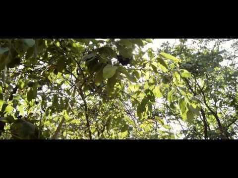 Lulu   Ungondibwelezera Official Video