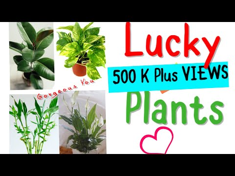 Lucky Plants-These Plants Attract Money And Bring Good Fortune|Fengshui Plants|Gorgeous You|