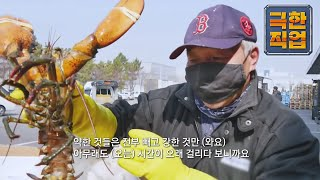 극한직업 - Extreme JOB_바다의 제왕 킹크랩과…
